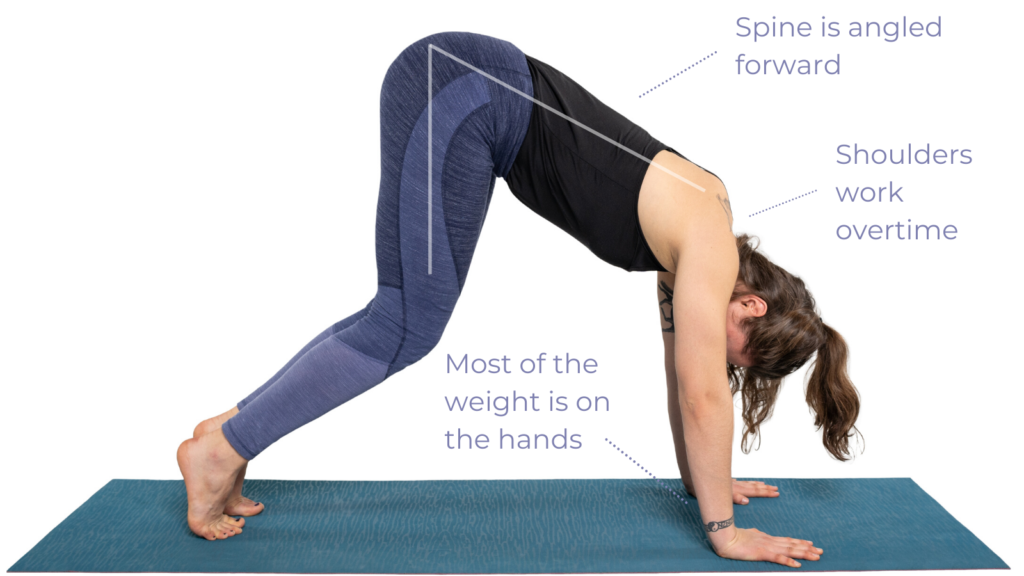 Downward Facing Dog Pose with bent knees but weight is poorly distributed